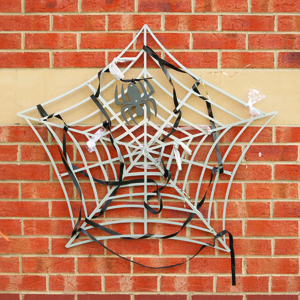 Weaving Spiders Web